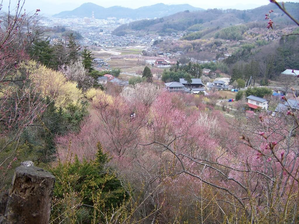 花見山から福島市街