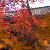 燃える秋色