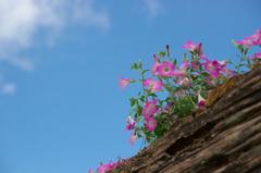 メー・ホン・ソンの花