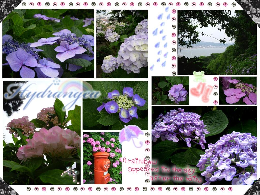 紫陽花 2009 総集篇