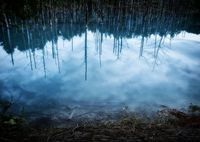 美瑛町 青い池
