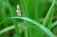 雨上がりの草原で・・・