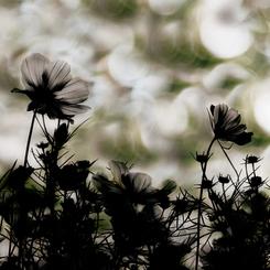 CANON Canon EOS 5D Mark IIで撮影した植物(Autumn orchestra)の写真(画像)
