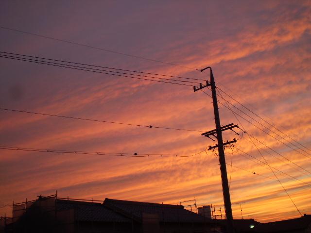 紫とオレンジライン