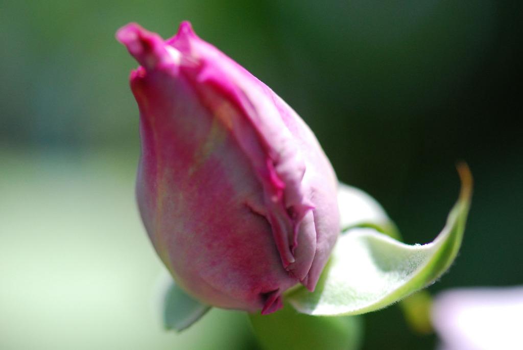 花びらを広げたい!
