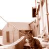 尾道 若い猫