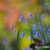 秋の景色3@寿長生の郷