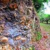 巨岩 彦根城梅林