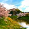 三室山の桜 1