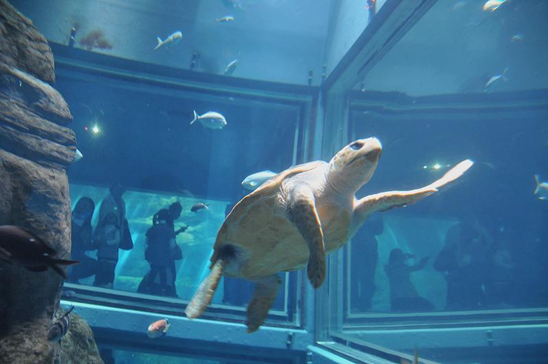 亀 海遊館