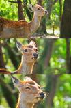 Deer 01/HDR TONE