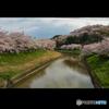 三室山の桜 2