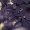 Spring Color_2