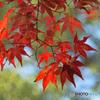 秋の景色1@寿長生の郷