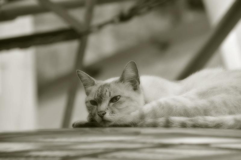尾道 ひなたぼっこをする猫