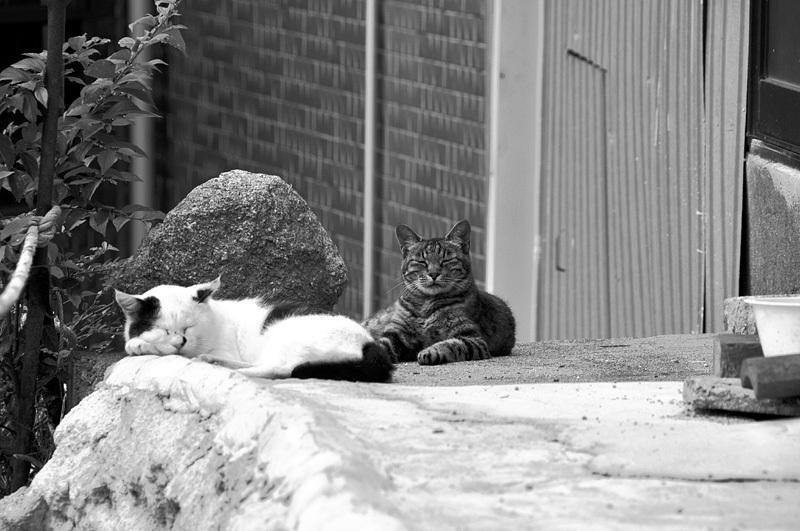 尾道 夫婦猫