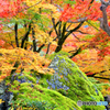 嵐山の秋模様 09