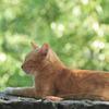 A cat relaxing 01/ wakayama