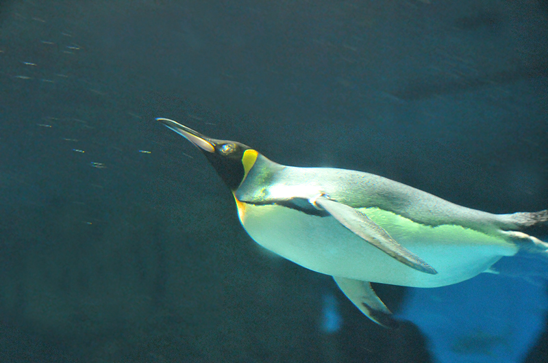 ペンギン 海遊館