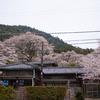 桜に囲まれた家