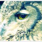 PENTAX PENTAX K-xで撮影した動物(Animals。)の写真(画像)