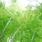 NIKON NIKON D80で撮影した植物(DSC_0077)の写真(画像)