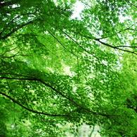NIKON NIKON D80で撮影した植物(DSC_0068)の写真(画像)