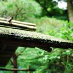 NIKON NIKON D80で撮影した植物(DSC_0071)の写真(画像)