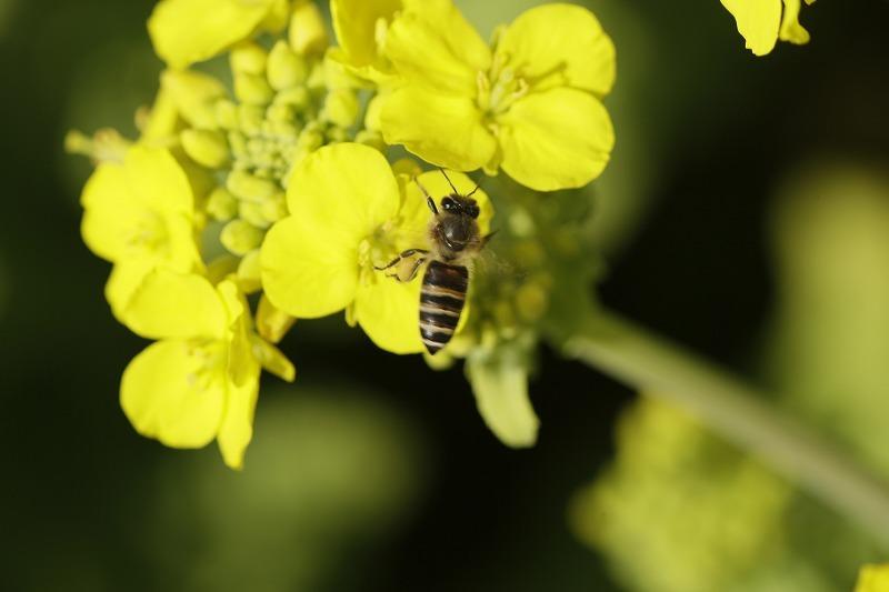 春一番ハチ9
