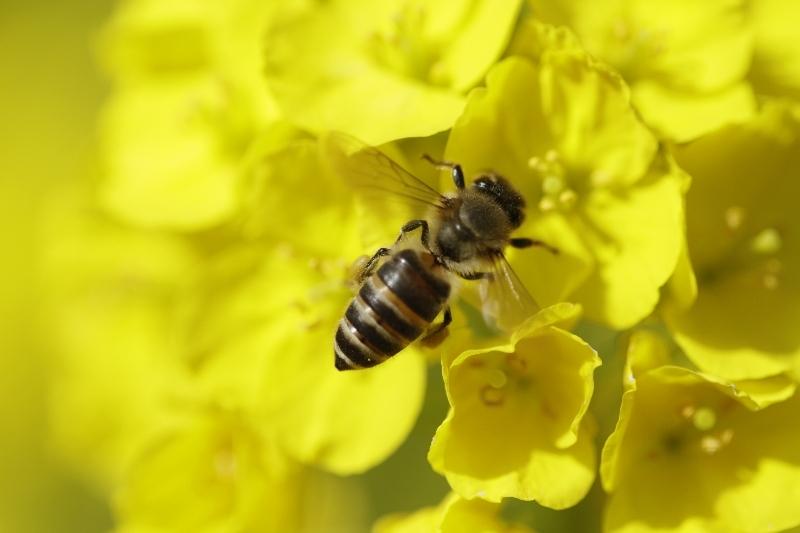 春一番ハチ2