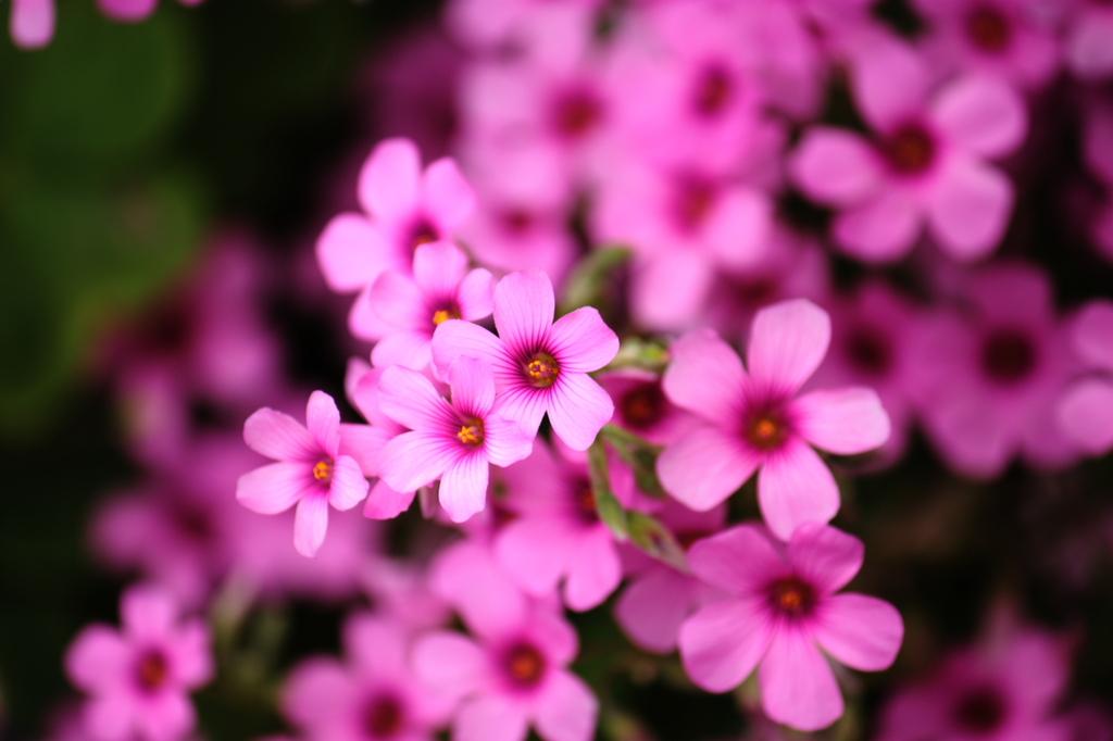 名も知らぬ赤い花