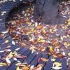My autumn.