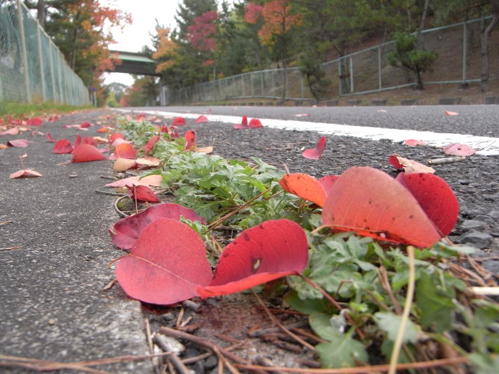 街路樹の落葉