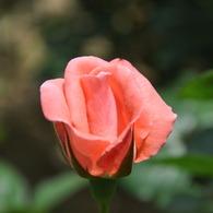 NIKON NIKON D90で撮影した植物(DSC_0166)の写真(画像)