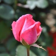 NIKON NIKON D90で撮影した植物(DSC_0175)の写真(画像)