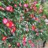 NIKON NIKON D90で撮影した植物(DSC_0174)の写真(画像)