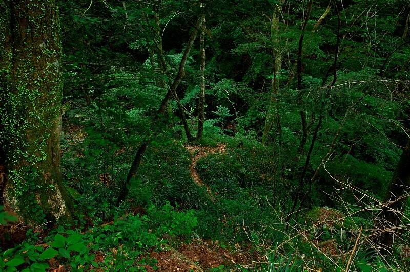 緑のある風景#1