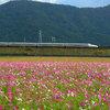 あっ、新幹線!