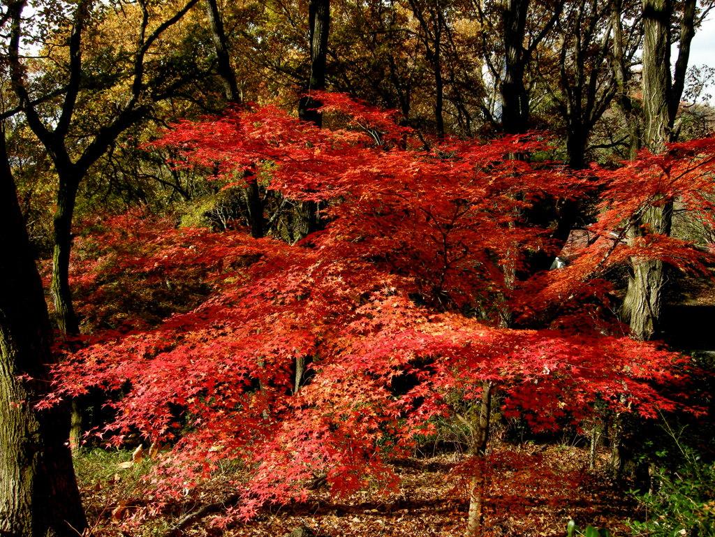 生駒の紅葉