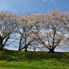2010桜