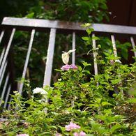 OLYMPUS E-420で撮影した風景(ふわりひらり)の写真(画像)