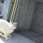 DOCOMO SH01Bで撮影した動物(お出かけですか?)の写真(画像)