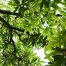 OLYMPUS E-410で撮影した植物(見上げる)の写真(画像)