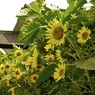 OLYMPUS E-410で撮影した植物(夏のはじまり)の写真(画像)