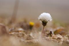 雪の綿帽子