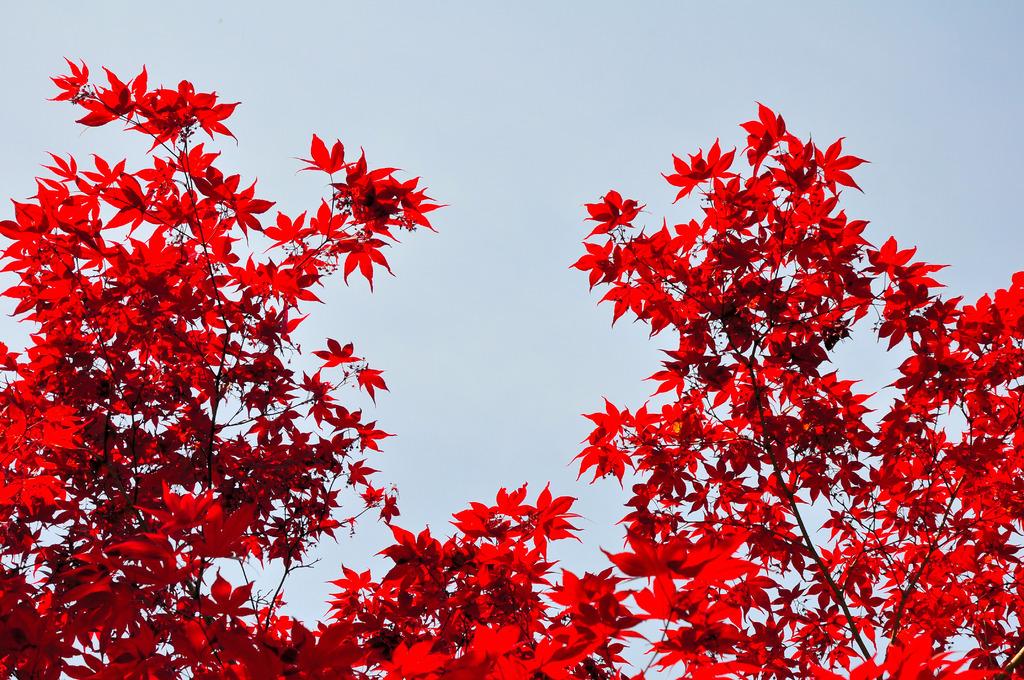 春なのに秋?