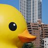 水都大阪2009*例のアヒル