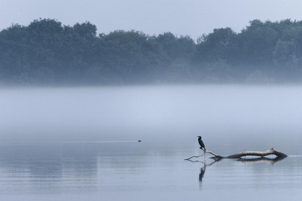 朝の木曽川