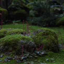 CANON Canon EOS 40Dで撮影した植物(しっとり会議)の写真(画像)