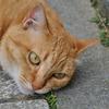 散歩にて(猫)